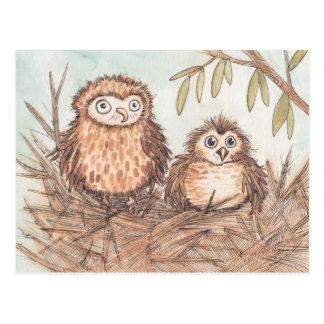 Cartão Postal Irmãos bonitos da coruja