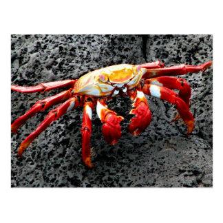 Cartão Postal Isla Seymour, Galápagos, caranguejo vermelho