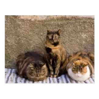 Cartão Postal Italia, Cinque Terre, Vernazza. Três gatos ao lado