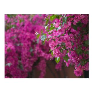 Cartão Postal Italia, Sicília, Cefalu, pátio florescido perto