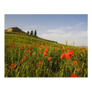 Cartão Postal Italia, Toscânia, casa de campo de Tuscan no