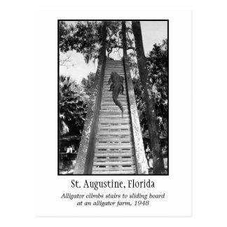 Cartão Postal Jacaré retro de St Augustine