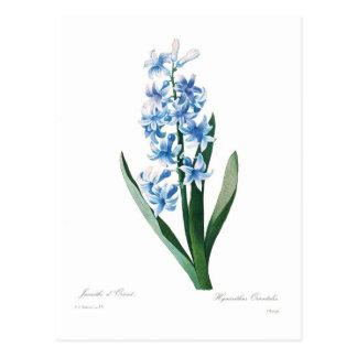 Cartão Postal Jacinto azul