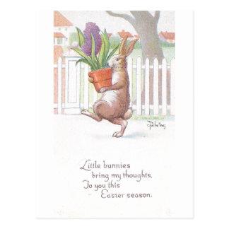 Cartão Postal Jacinto roxo Potted levando do coelho