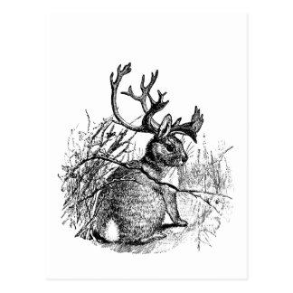 Cartão Postal jackalope