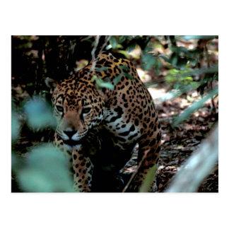 Cartão Postal Jaguar