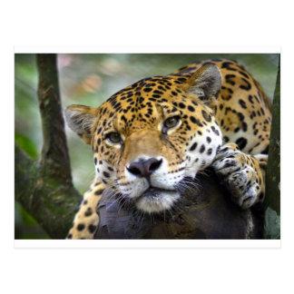 Cartão Postal Jaguar que relaxa na árvore