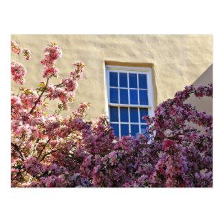 Cartão Postal Janela & flores