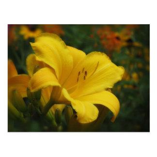 Cartão Postal Jardim amanteigado da pipoca - hemerocallis
