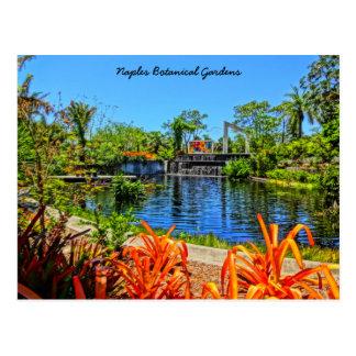 Cartão Postal Jardim botânico de Nápoles Florida - parede do