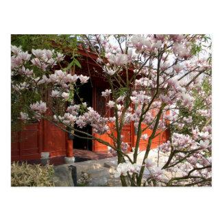 Cartão Postal jardim chinês