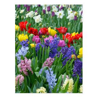 Cartão Postal Jardim colorido do primavera