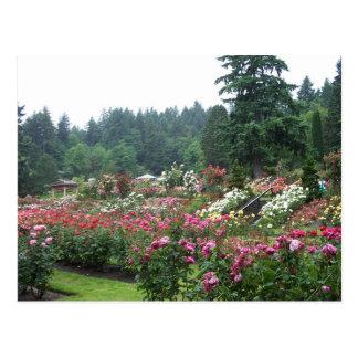 Cartão Postal Jardim cor-de-rosa de Portland