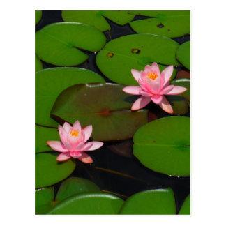 Cartão Postal Jardim cor-de-rosa do lírio de água dos lótus,