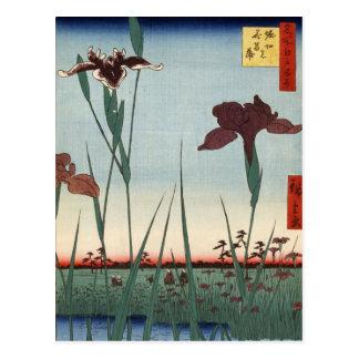 Cartão Postal Jardim da íris de Horikiri (堀切の花菖蒲)
