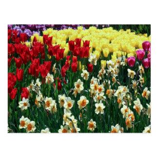 Cartão Postal Jardim da tulipa