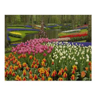 Cartão Postal Jardim da tulipa e do jacinto, jardins de