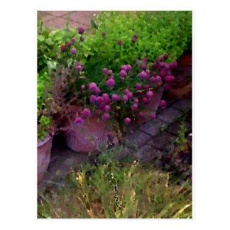 Cartão Postal Jardim de erva