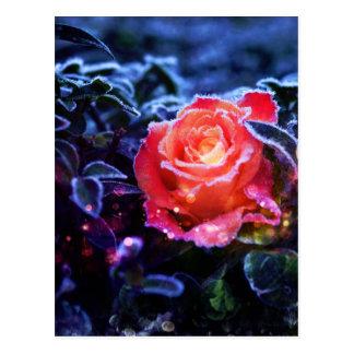 Cartão Postal Jardim de rosas bonito da fantasia do rosa do