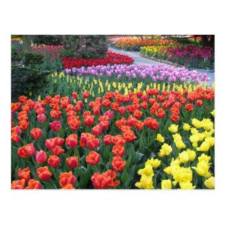 Cartão Postal Jardim do amigo do arco-íris