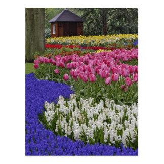 Cartão Postal Jardim do jacinto de uva, do jacinto e das