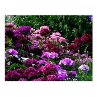 Cartão Postal Jardim no verão