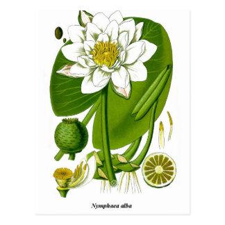 Cartão Postal Jardineiro