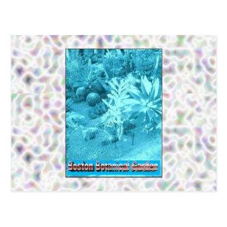 Cartão Postal Jardins botânicos de Boston