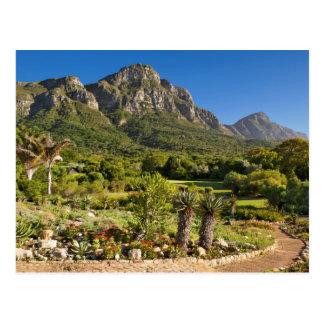 Cartão Postal Jardins botânicos de Kirstenbosch, Cape Town