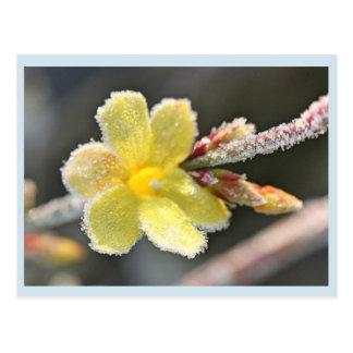 Cartão Postal Jasmim de inverno