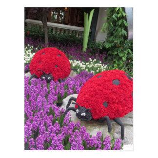 Cartão Postal Joaninha G ORIGINAL da flor do jardim da borboleta