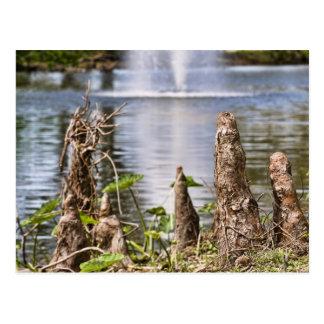 Cartão Postal Joelho de Cypress