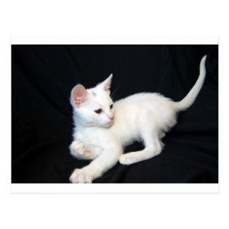 Cartão Postal Jogo branco do gato