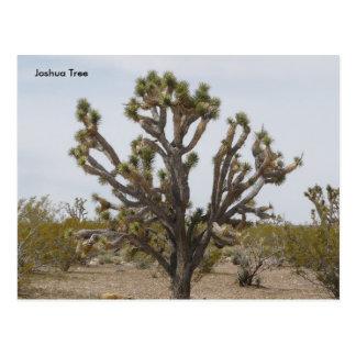 Cartão Postal joshua, árvore de Joshua