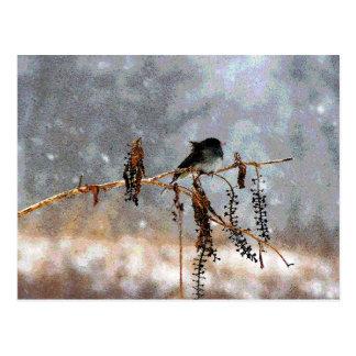 Cartão Postal Junco na neve