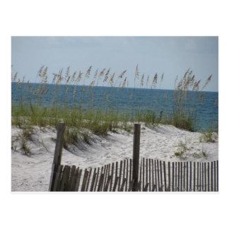 Cartão Postal Juncos na praia