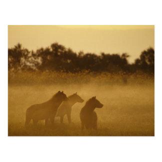 Cartão Postal Kenya: Parque nacional de Turkana do lago, bloco