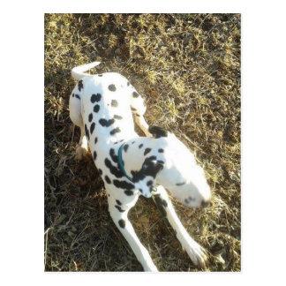 Cartão Postal Kevin o Dalmatian