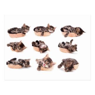 Cartão Postal kittens dentro tem sapatilhas