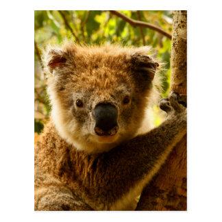 Cartão Postal Koala