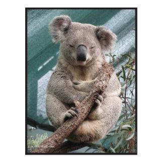 """Cartão Postal Koala, cartão, 2013, 4,25"""" x 5,6"""""""
