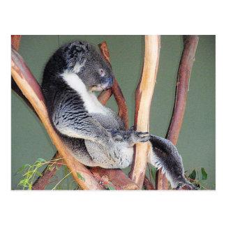 Cartão Postal Koala legal