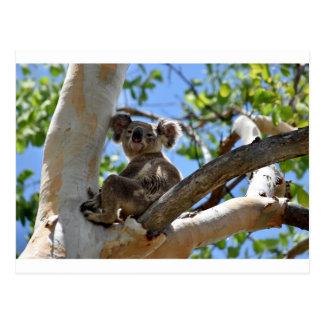 CARTÃO POSTAL KOALA NA ÁRVORE QUEENSLAND AUSTRÁLIA