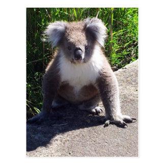 Cartão Postal Koala no selvagem