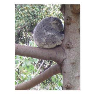 Cartão Postal Koala peluches