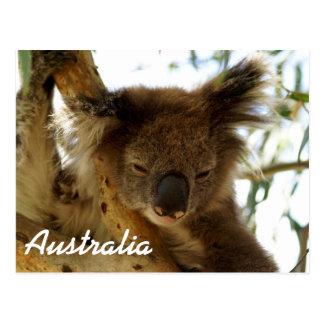 Cartão Postal Koala selvagem que dorme na árvore de eucalipto,