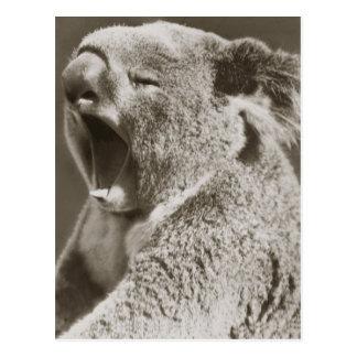 Cartão Postal Koala sonolento que boceja