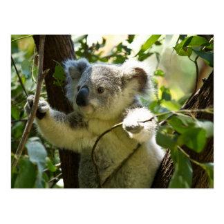 Cartão Postal Koala surpreendente bonito do bebê em uma árvore