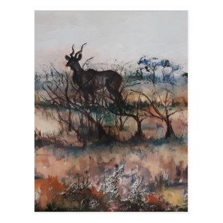 Cartão Postal Kudu Bull