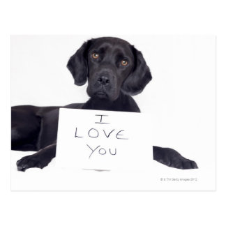 Cartão Postal Labrador preto 13 meses